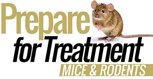 Mice-and-rodents-pest-control-prepare-for-treatment