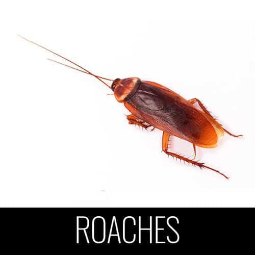 american cockroach pest control denver co
