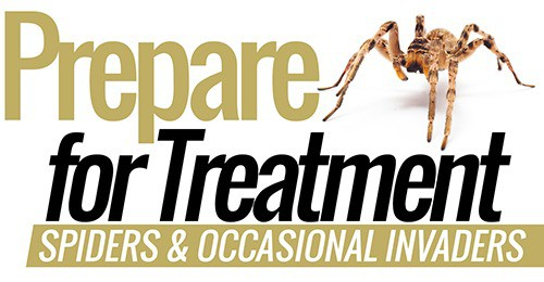 Spiders-pest-control-treatment