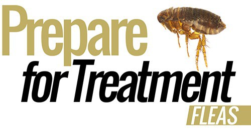 fleas-pest-control-prepare-for-treatment