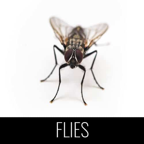 flies pest control denver co